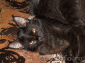 котики красивые и ухоженные