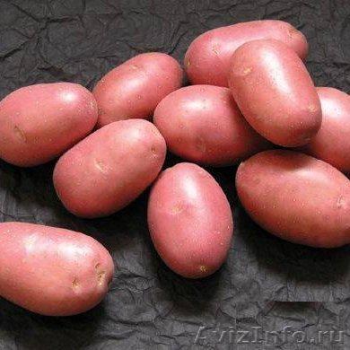 Купить картошку оптом в чувашии фото 99-623