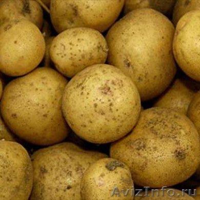 Купить картошку оптом в чувашии фото 99-82